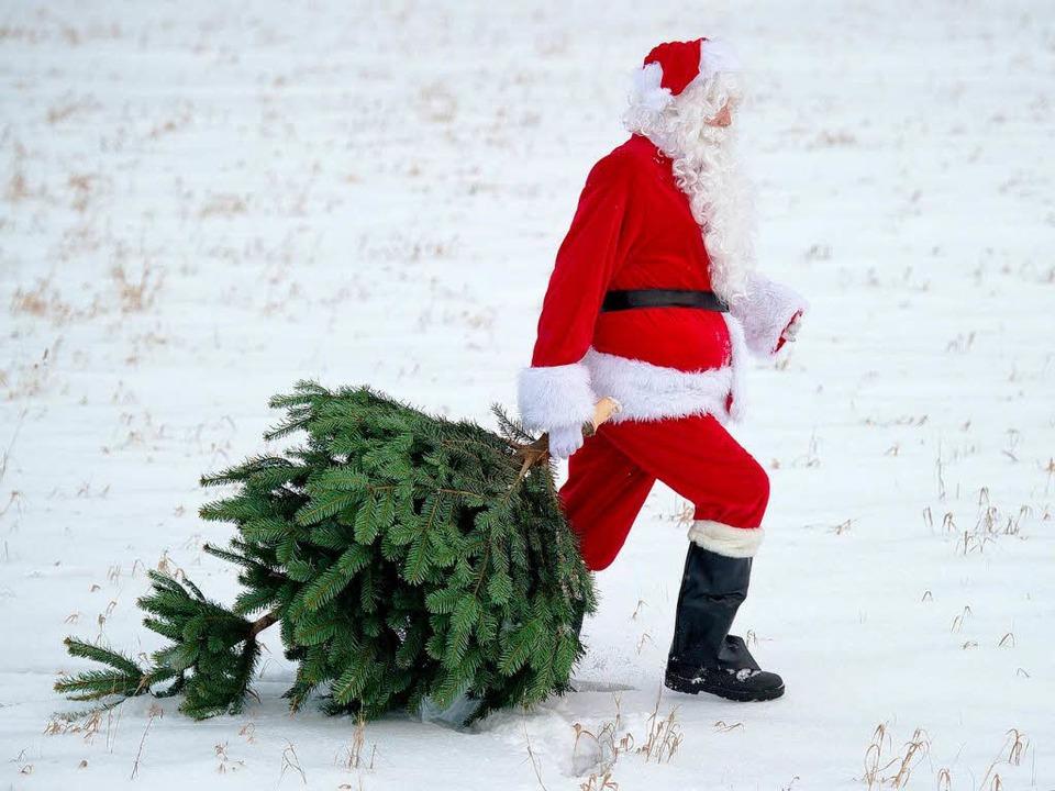 Nordmanntanne Weihnachtsbaum.Nur Nordmanntanne Die Fichte Ist Der Ur Weihnachtsbaum Titisee