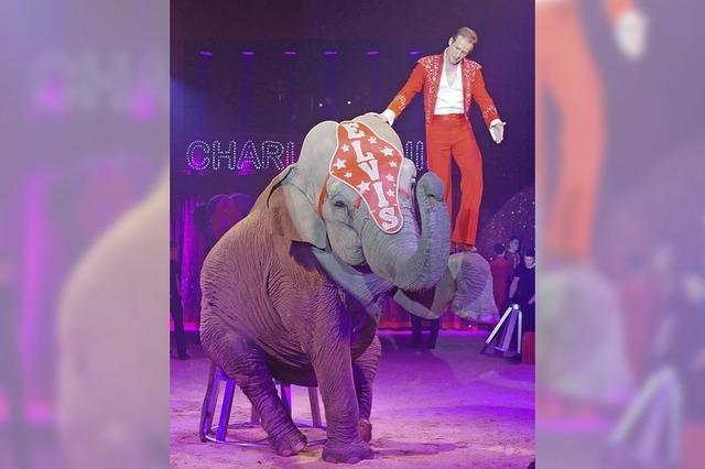 Manege frei: Zirkusse in der Region