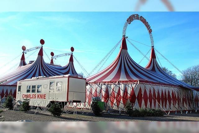 Zirkuskünstler aus neun Nationen