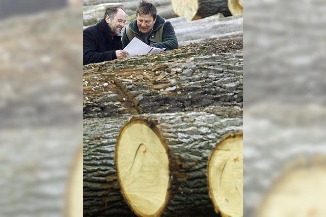 Grüne wollen sanftere Forstwirtschaft geprüft wissen