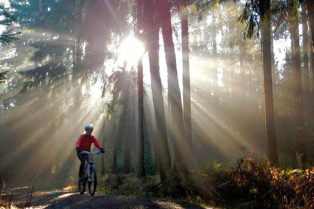Mountainbikepark auf neuem Terrain – endet jetzt der Streit?