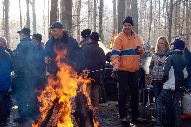 250 Festmeter Brennholz lang im Angebot
