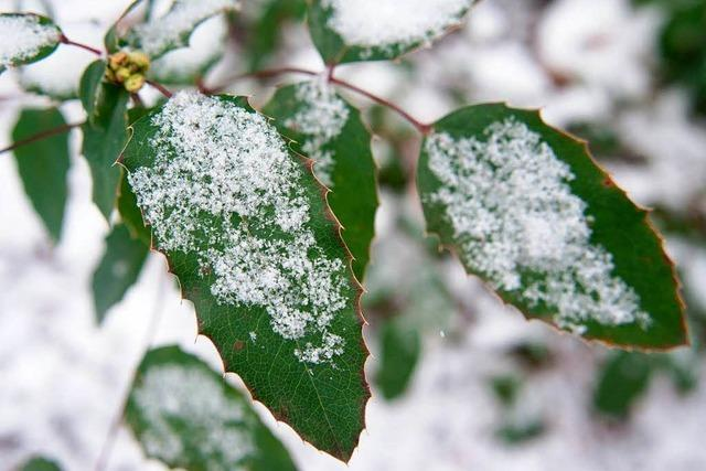 Garten im Januar: An frostfreien Tagen schneiden und setzen