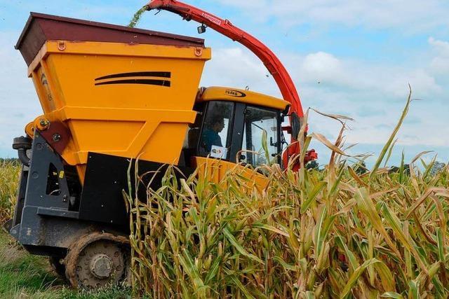 Lohnunternehmen haben im Agrarsektor viel Arbeit