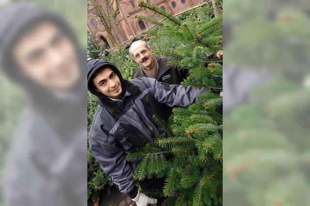 Kein Ärger mehr: Christbaumverkauf wurde neu geregelt