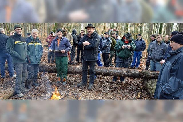 Trocknen lassen steigert den Brennwert des Holzes