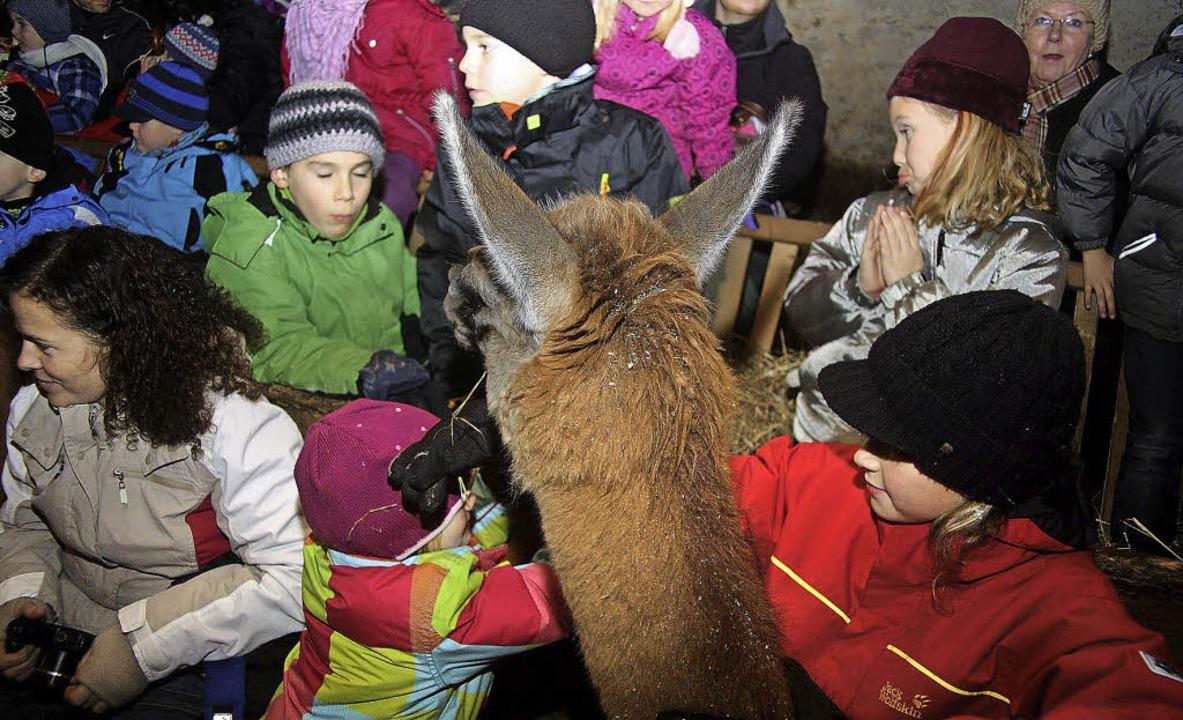 Stallweihnacht mit Lamas und Schafen: ...nst in Bethlehem gefühlt haben mögen.   | Foto: Heiner Fabry