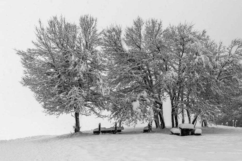 Frischer Schnee auf dem Schauinsland (Foto: Carlotta Huber)