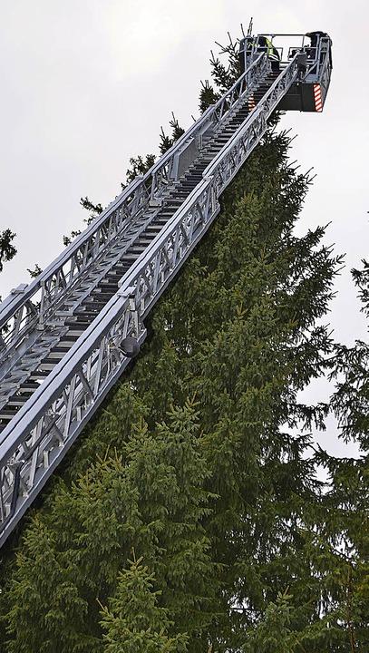 Rettung aus dem Tannenwipfel<ppp></ppp>  | Foto: Kamera24
