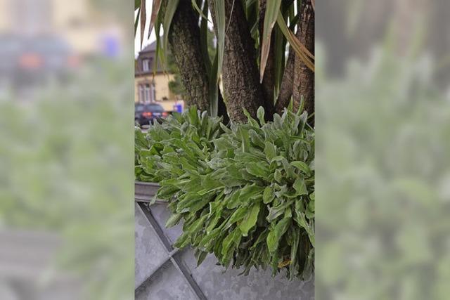 Grüne wollen Offenburg zur