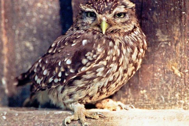 Lahrs Naturschutzbund zieht positive Bilanz