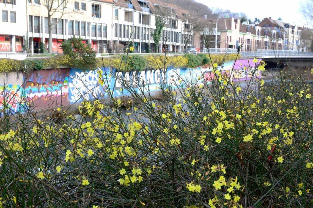 Blütenzauber am Dreisamufer.  | Foto: Ingo Schneider