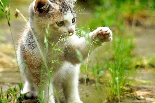 Verwilderte Katzen sorgen für Aufregung am Rasthof Mahlberg