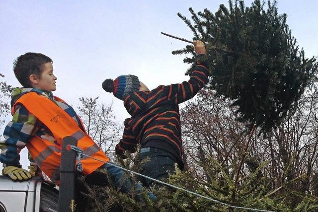 Tannenbäume stützen Jugendarbeit