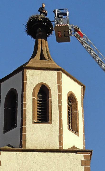Schwindelfrei müssen die Helfer sein, die die Storchenhorste reinigen.   | Foto: PRIVAT
