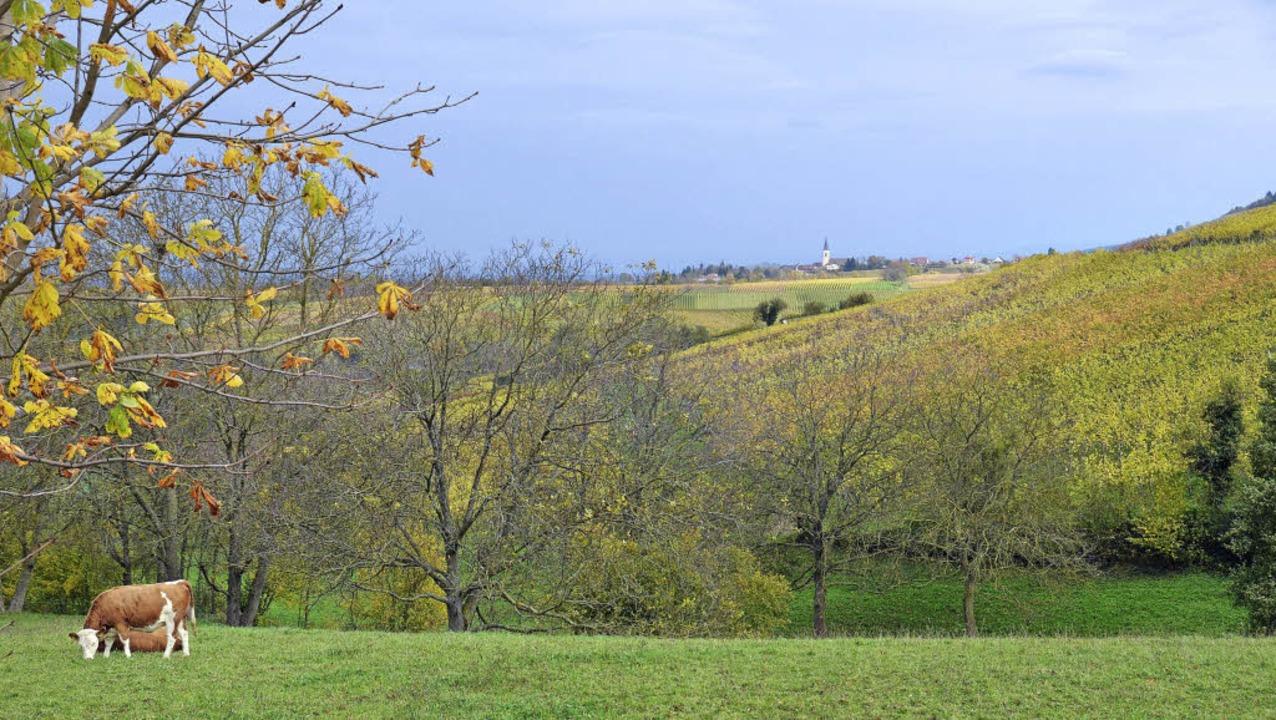 Landwirte wollen die Kulturlandschaft ...d   gegen noch mehr Flächenverbrauch.   | Foto: Umiger