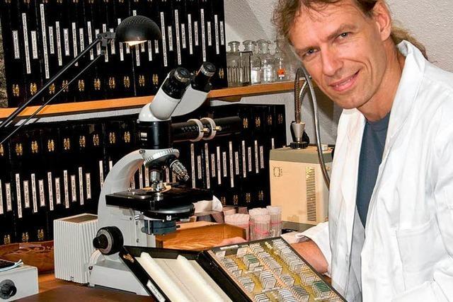 Bio-Lehrer weist neue Insektenart in Mitteleuropa nach