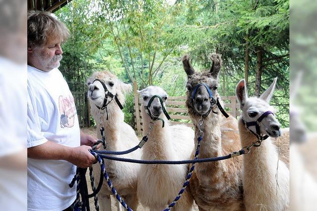 Sagenhaftes Lama-Trekking