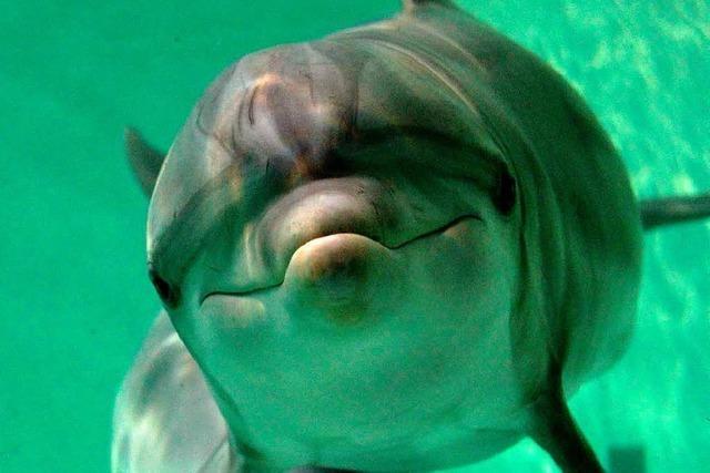 In der Bucht von Taiji werden wieder Delfine getötet