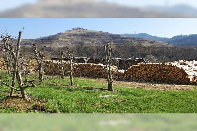 Vom Holzverkauf bis zur Tierhaltung