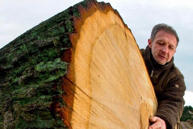 Bauern sollen Holz selbst verkaufen