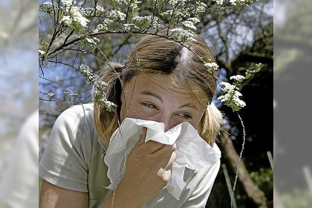 Allergiealarm im Winter
