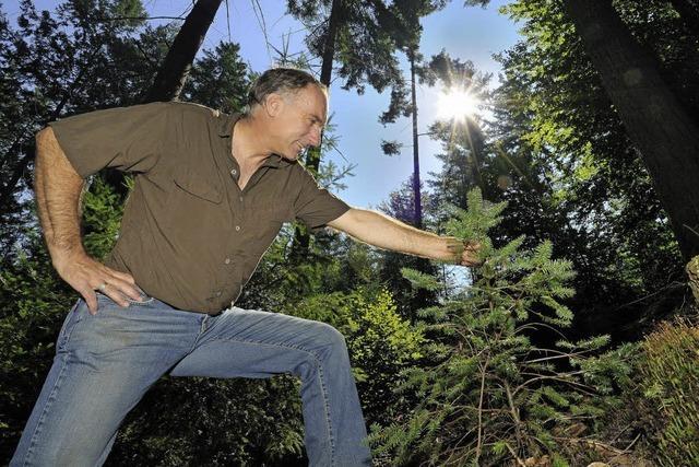 Der Stadtwald wirft Gewinn ab