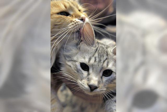 Runder Tisch schnürt Hilfspaket für Katzen