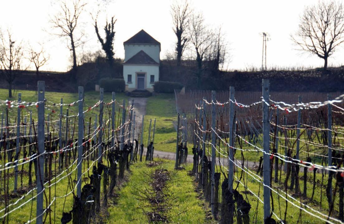 Der Hachberg soll der landwirtschaftli... und dem Weinbau vorbehalten bleiben.   | Foto: Sigrid Umiger