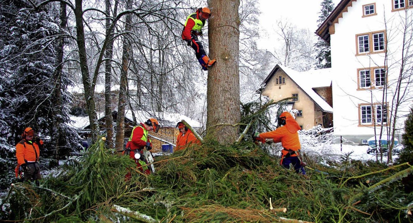 Kletterausrüstung Zum Bäume Fällen : Laubbäume nicht länger verstecken lenzkirch badische zeitung