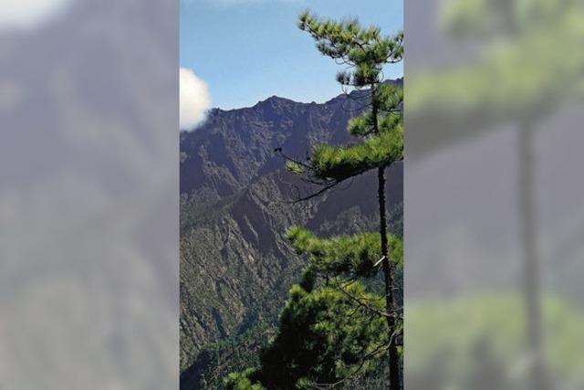 Ewiger Frühling in La Palma