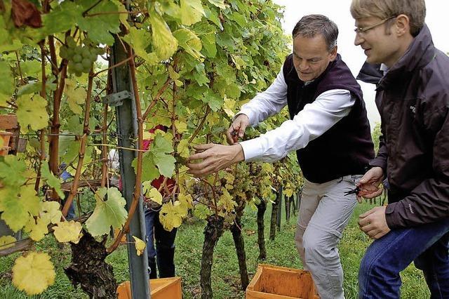 Zu wenig Wein: Engpässe werden nicht ausbleiben