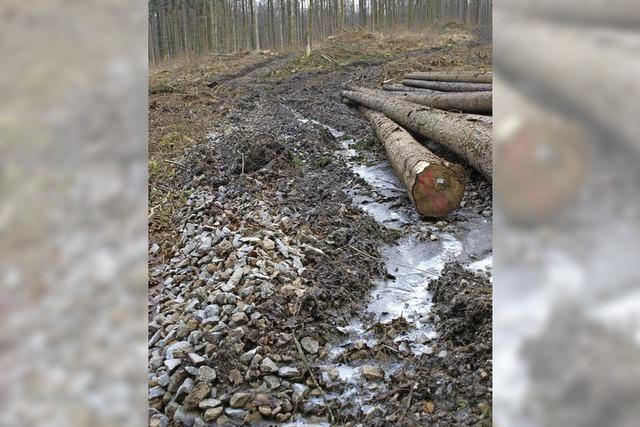 Kritik an Arbeiten im Wald