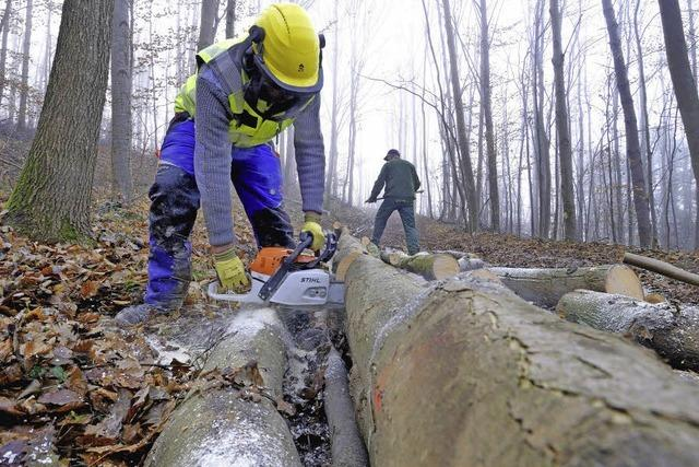 Immer mehr Waldarbeiter verunglücken tödlich