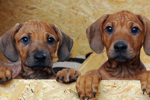 Neustädter ärgern sich über hohe Steuern für den zweiten Hund