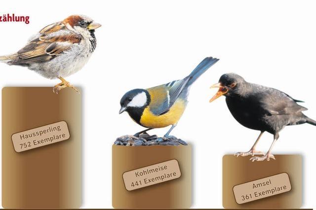 Vögel freuen sich über milden Winter