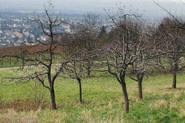 Exkursion: Naturschutzbund Lörrach lädt zur Winterbestimmung von Laubbäumen