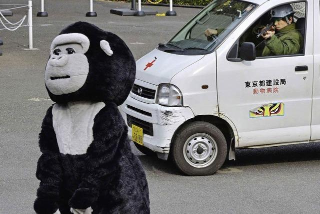 BADISCHE-ZEITUNG.DE: Plüsch-gorilla