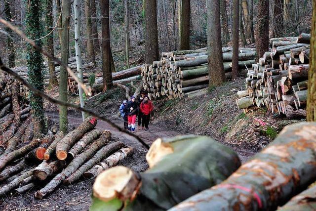 Bäume im Stadtwald über Zähringen und Herdern abgeholzt