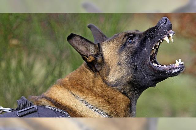 Geldstrafe für Schweizerin, deren bissiger Hund Polizisten angriff