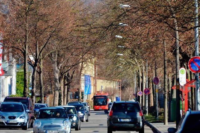 Kahlschlag in der Bahnhofstraße – 27 Bäume werden gefällt