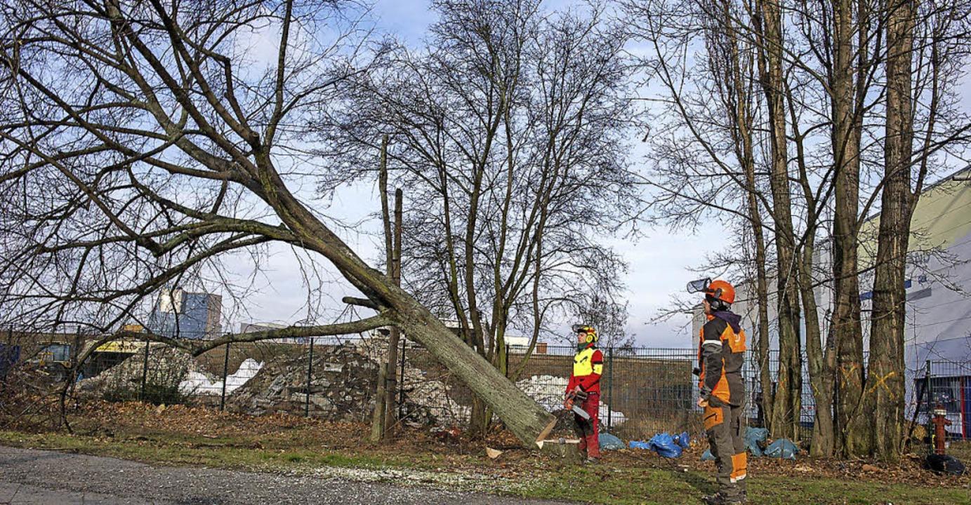 Ältere Leute, die notwendige Baumfäll-...n, dürfen sich an die Gemeinde wenden.  | Foto: dpa (Symbolbild)