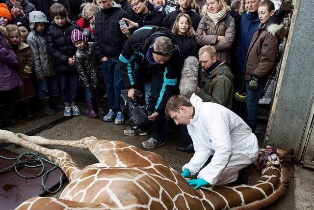 Giraffe Marius getötet