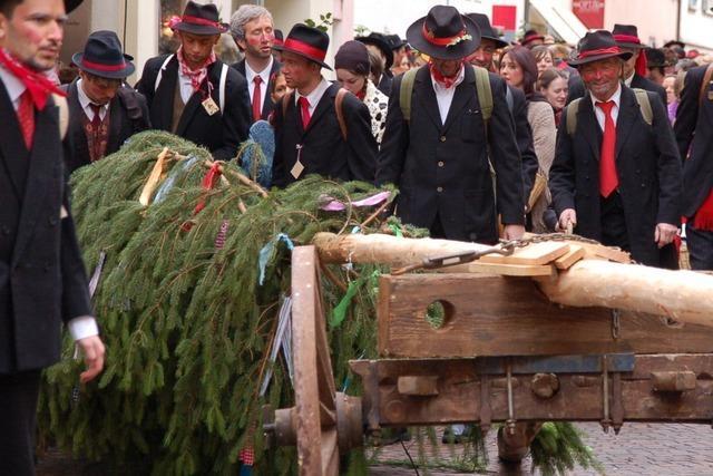 Fotos: Narrenbaumstellen in Bad Säckingen