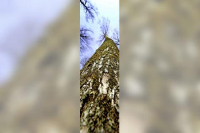 Die Auswirkungen des Klimawandels auf die Wälder im Markgräflerland