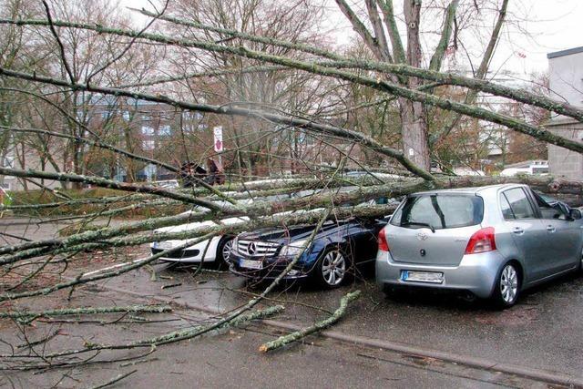 Tini in Bad Krozingen: Sturm lässt Baum auf parkende Autos krachen