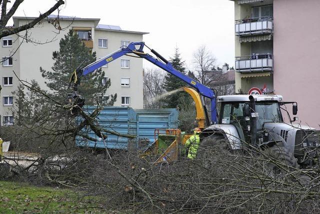 Bäume fallen für Zollfreie