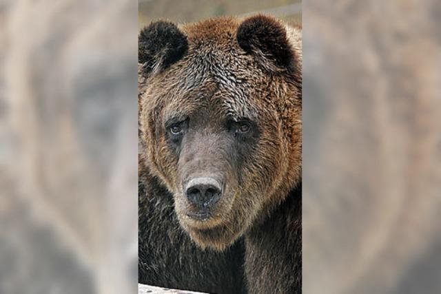 GESICHT DES TAGES: Bärenstarke Russen