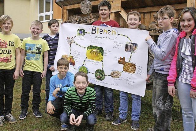 Schüler lernen alles rund um die Bienen