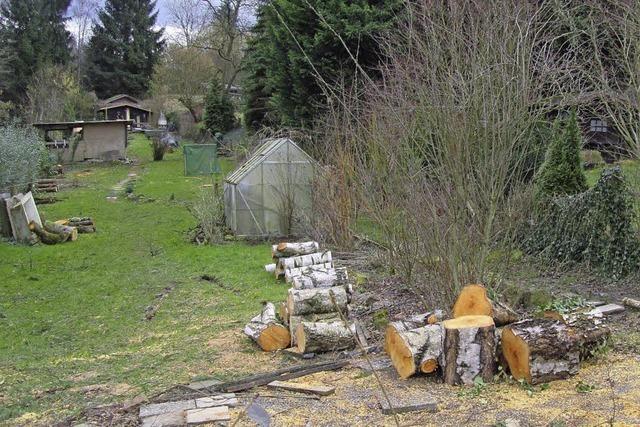Baumfällungen verärgern Gärtner